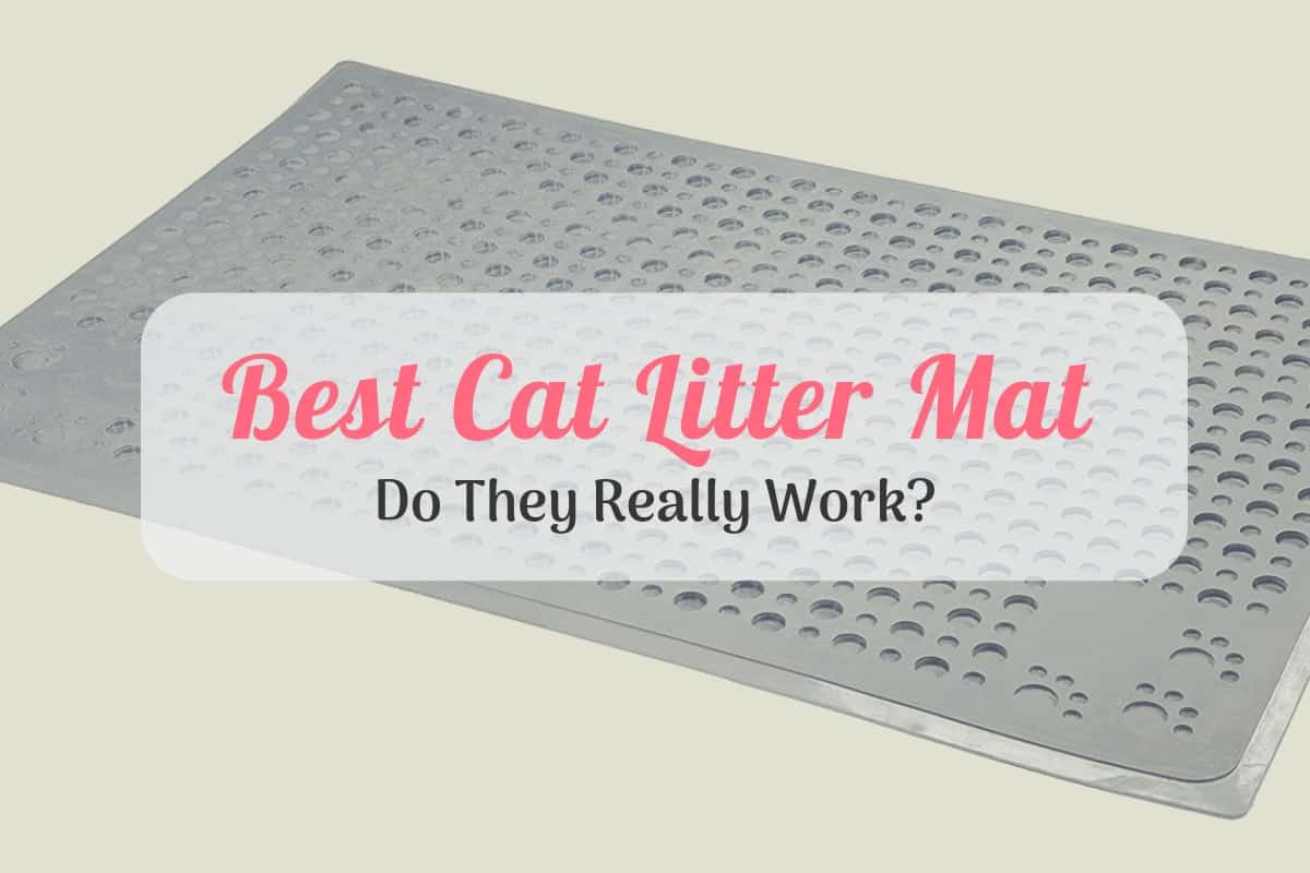 Our Best Cat Litter Mat Reviews