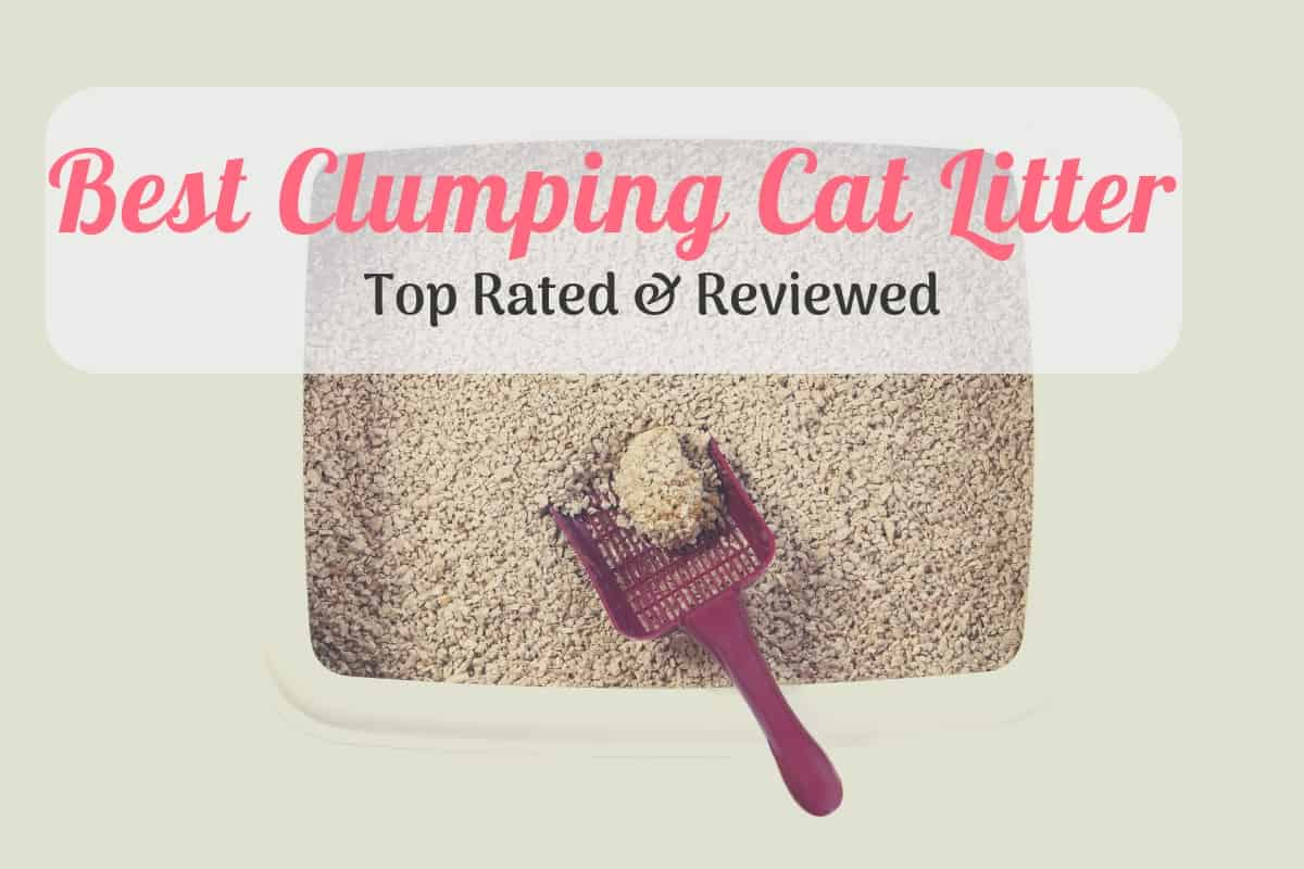 The 5 Best Clumping Cat Litters Reviewed 2019