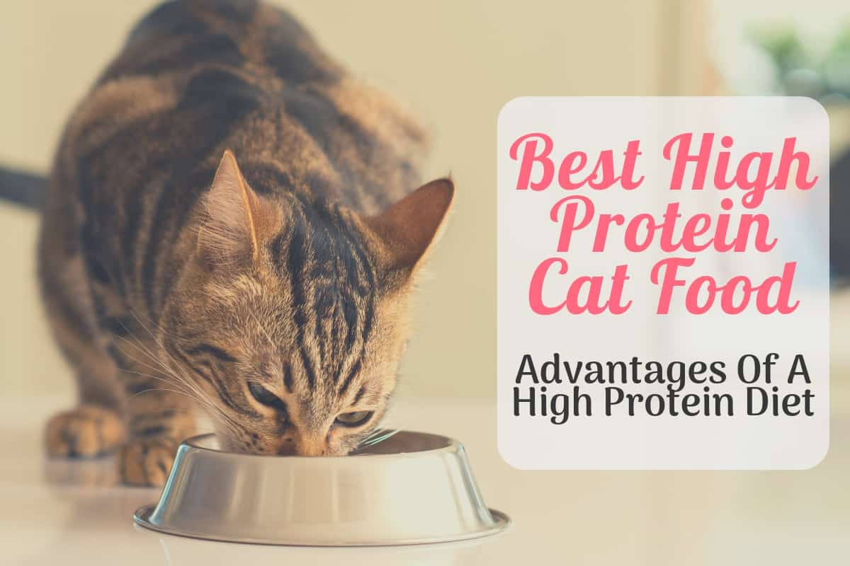 Best High Protein Cat Food