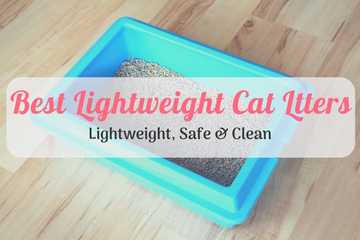 Our Best Lightweight Cat Litter Reviews