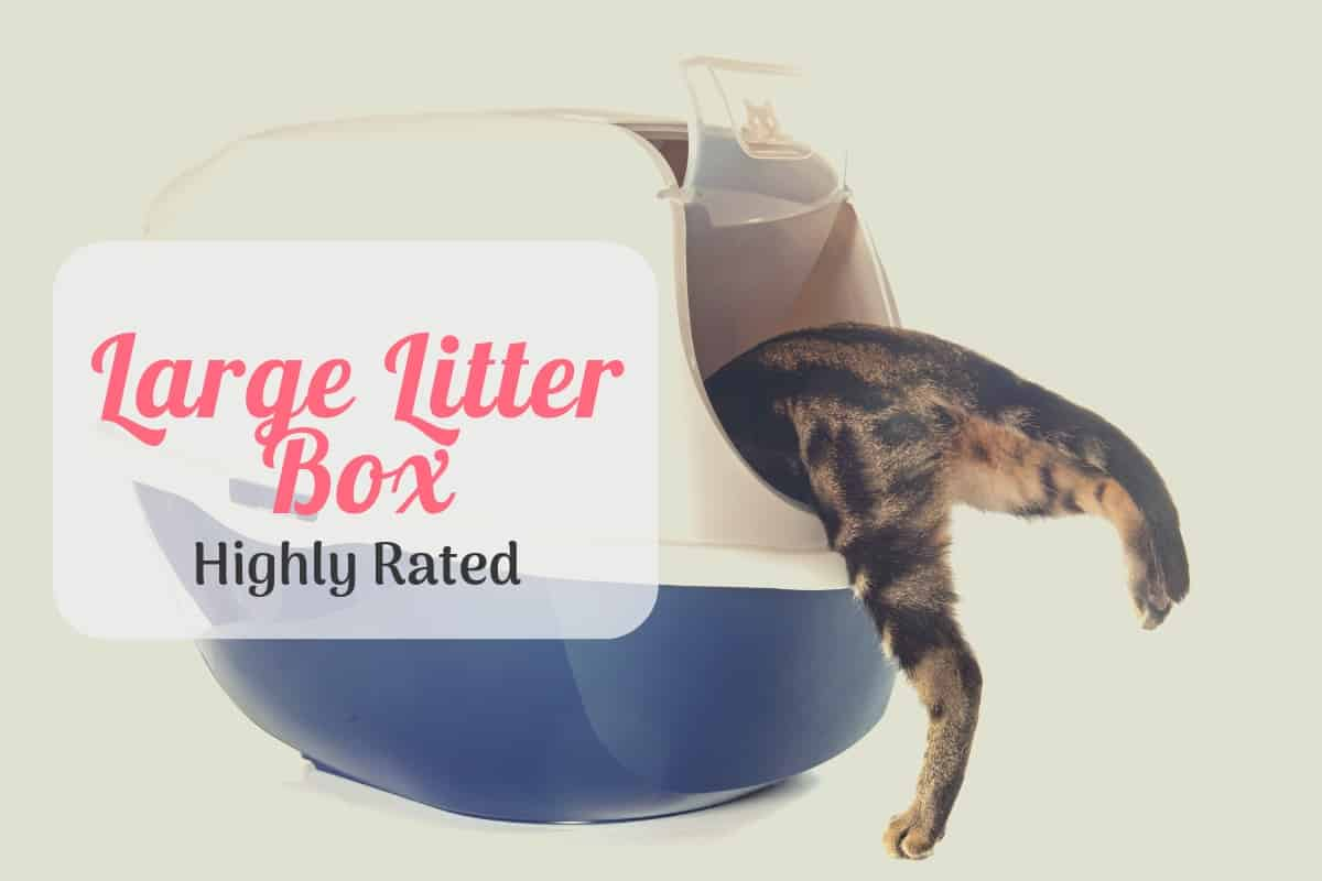 Large Litter Box Top Rated