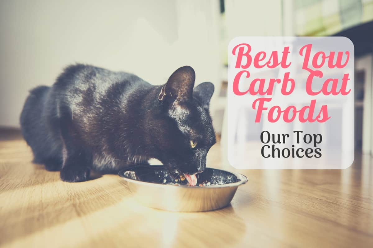 best low carb cat food featured image