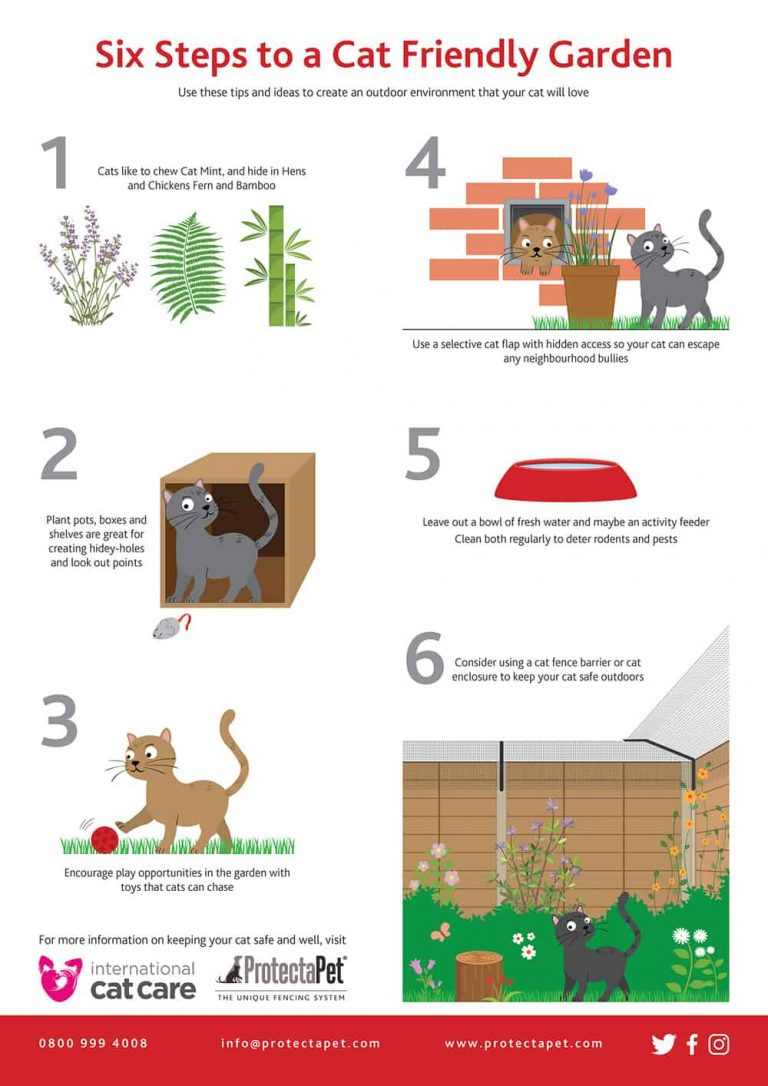 Guide to a cat friendly garden