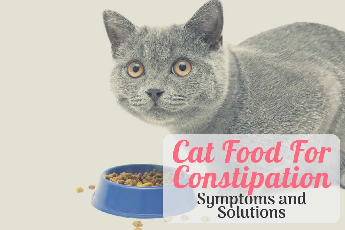 Cat Eating The Best Cat Food For Constipation