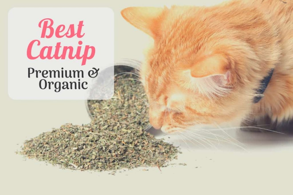 Cat smelling a pile of the best catnip