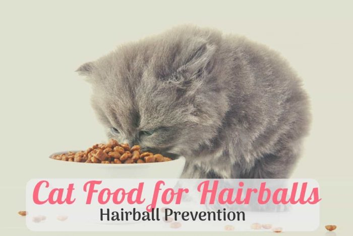 car eating the hairbell prevention cat food
