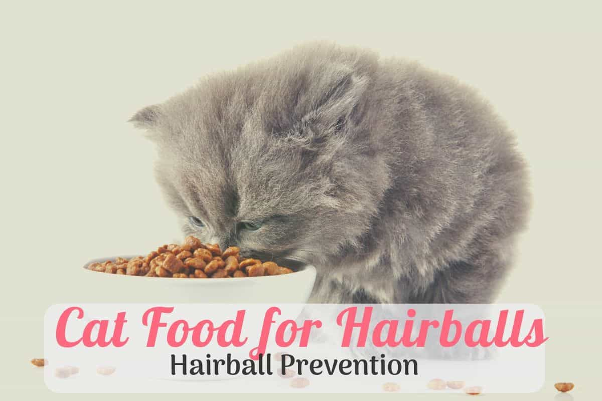 kitty eating cat food for hairball prevention