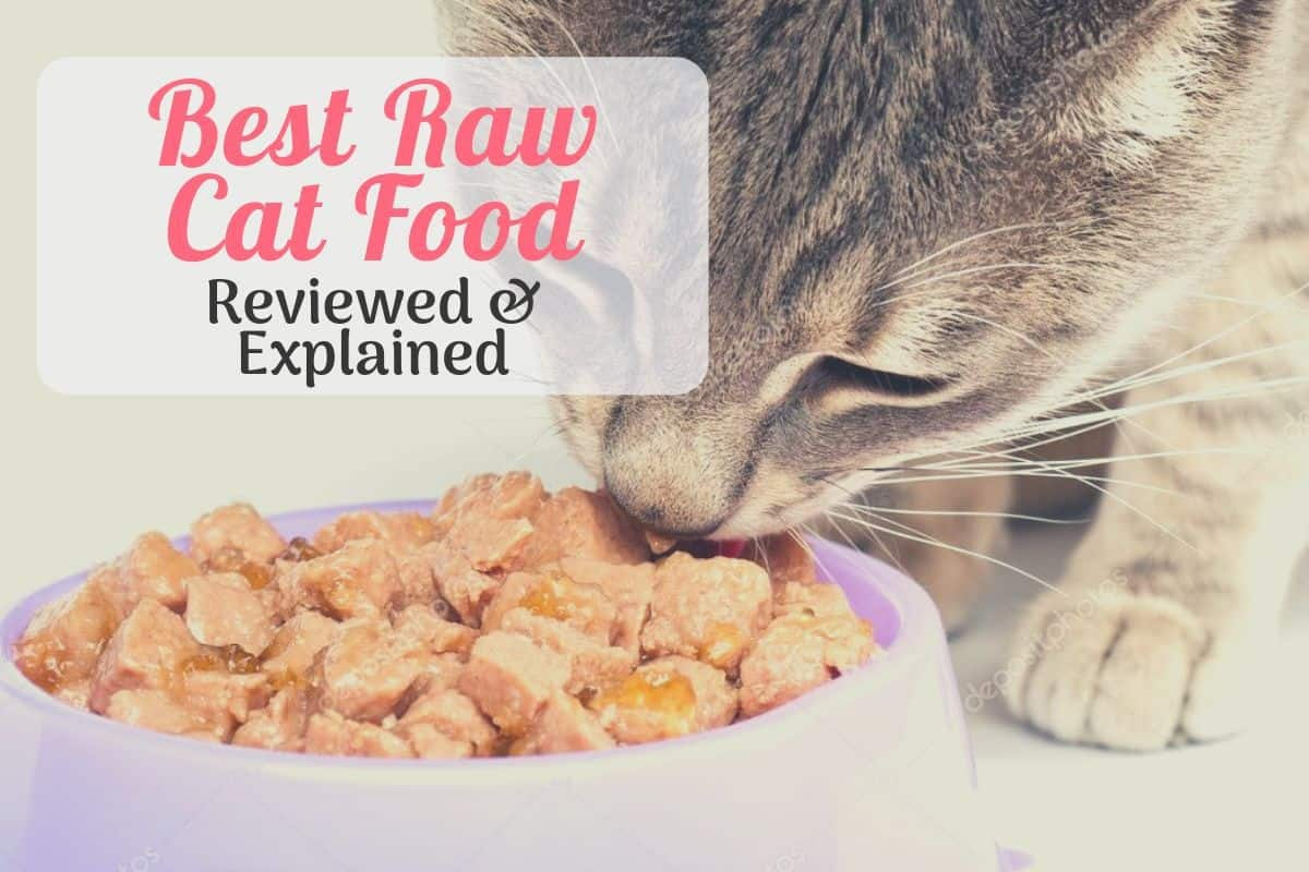 cat eating the best raw cat food