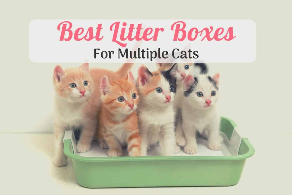 multiple kittens in the best cat litter box for multiple cats