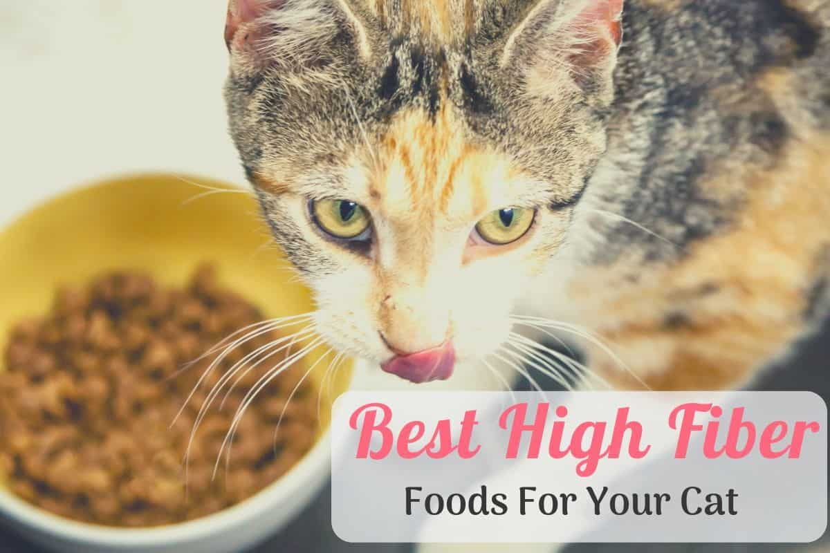 cat eating the best high fiber cat food