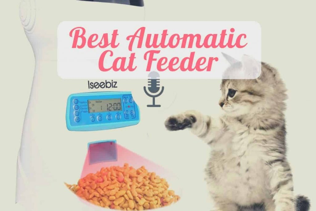 a kitty eating from the best automatic cat feeder