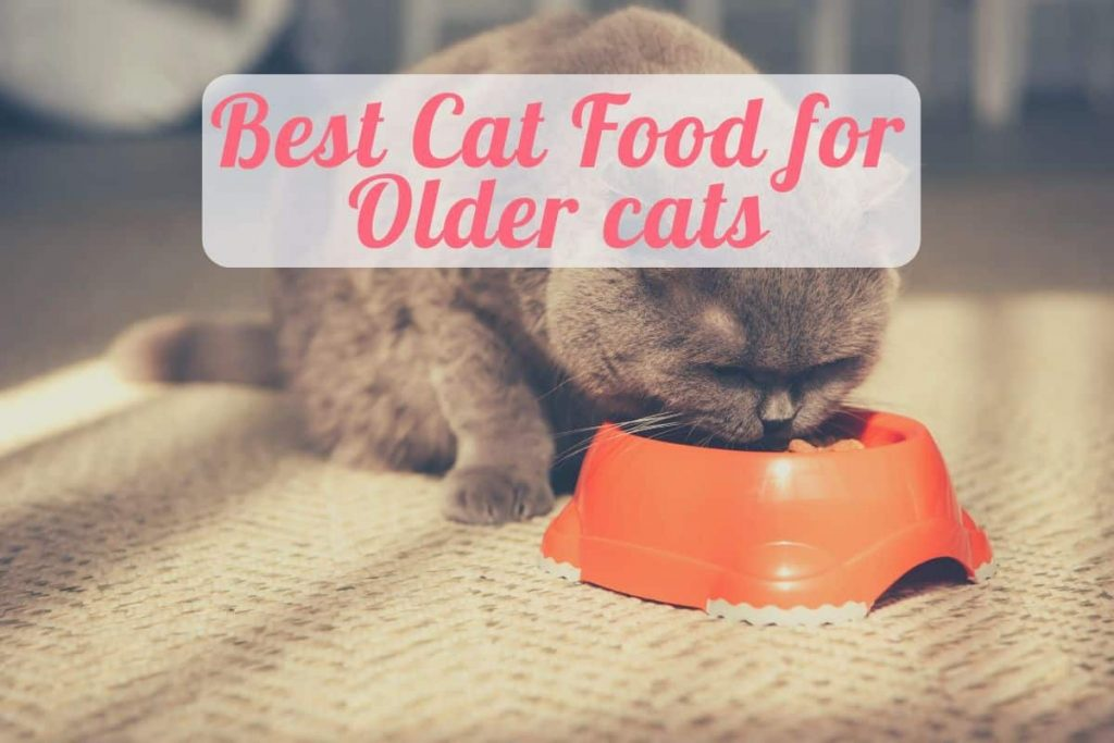 a cat eating top rated senior cat food