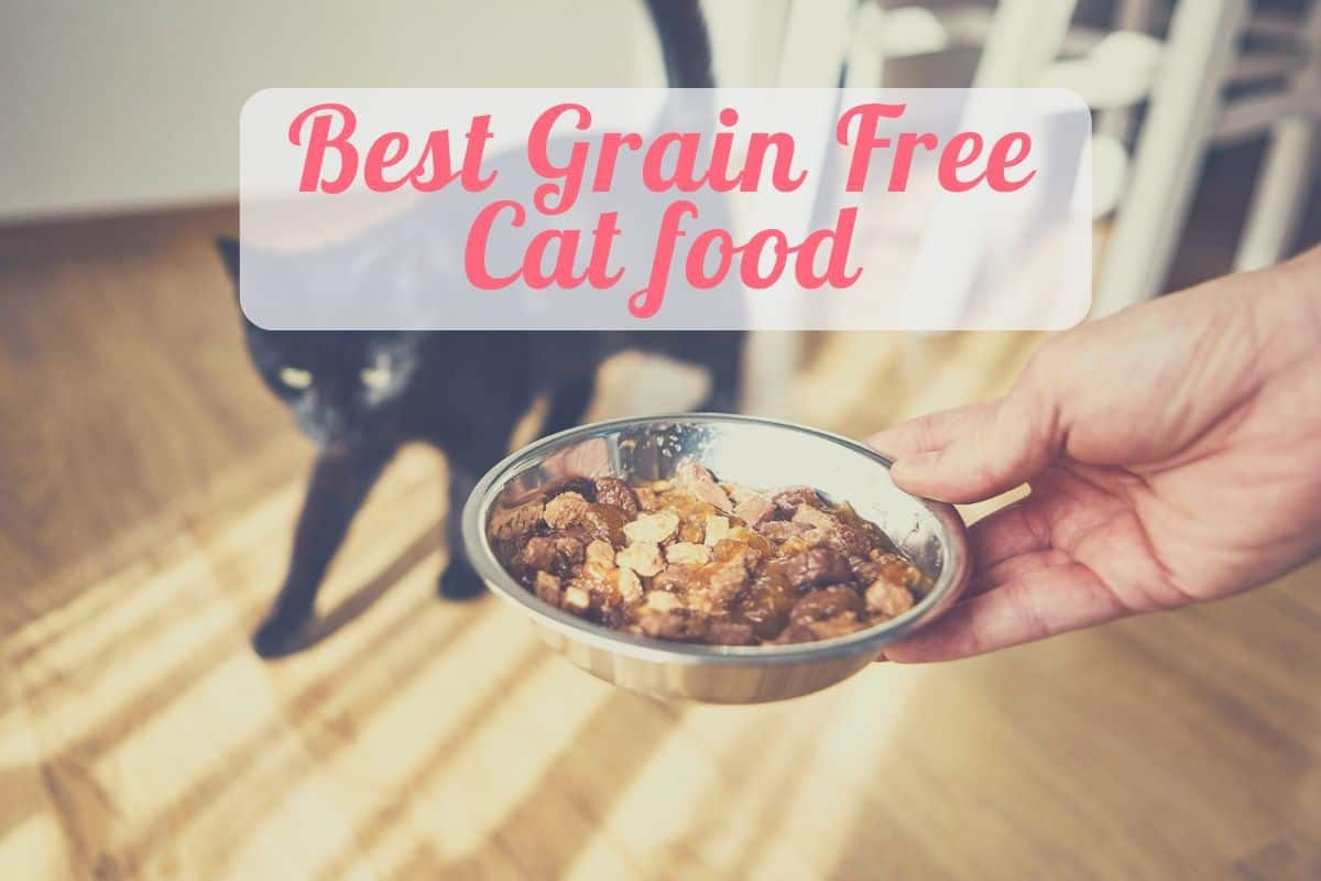 a cat eating the best grain free wet cat food