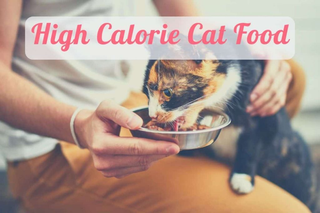 a cat eating the best high calorie cat food