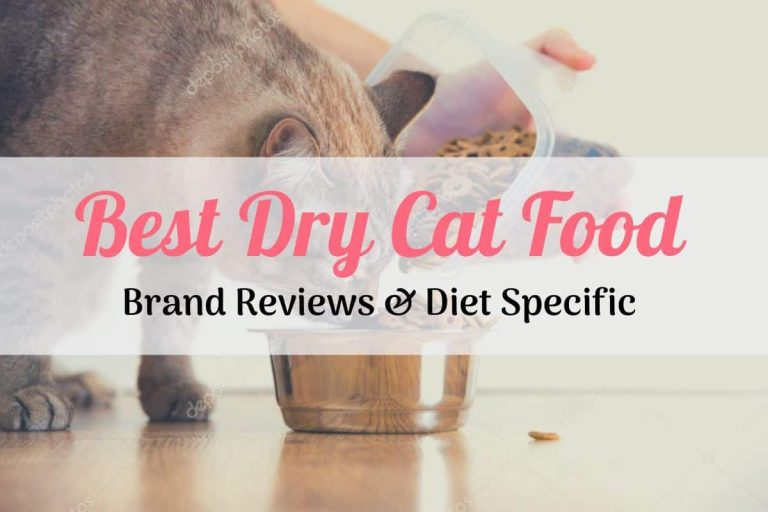 a cat eating the best dry cat food