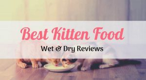 two kittys eating the best kitten food