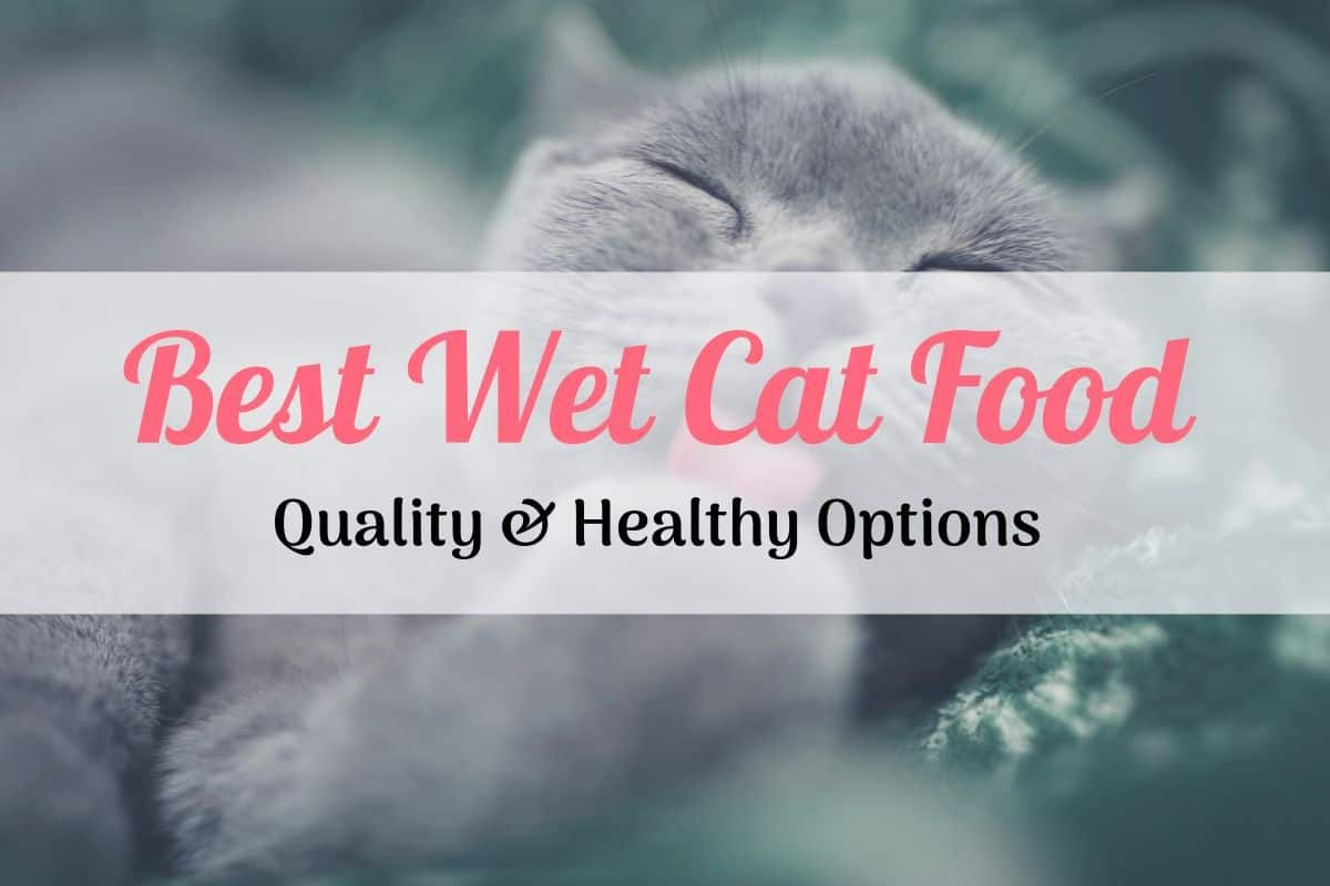 cat enjoying the best wet cat food