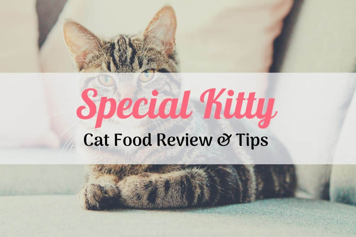 special kitty cat food reviews cat on a couch
