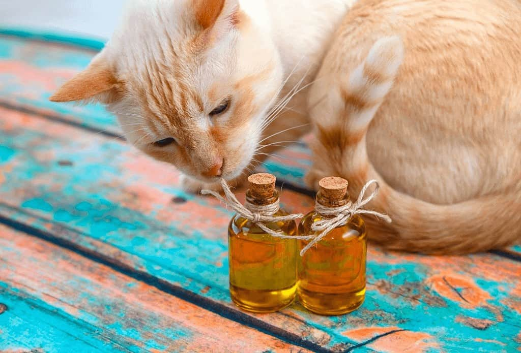 Safe Essential Oils for Cats