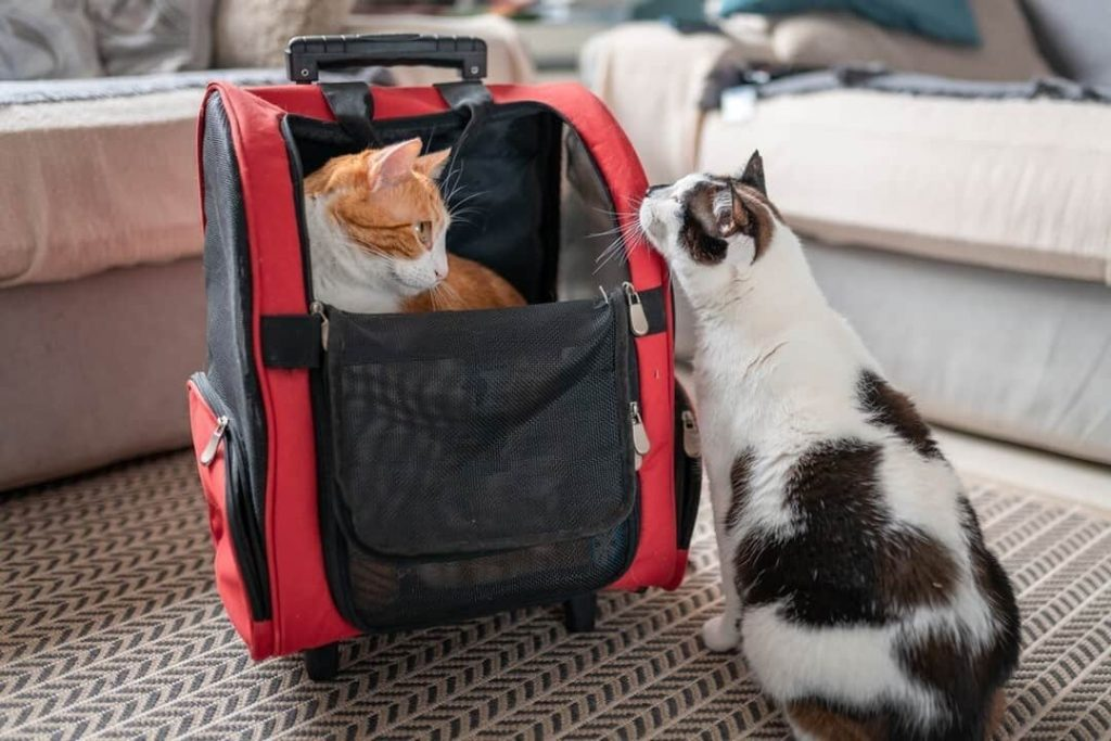Best Cat Backpacks