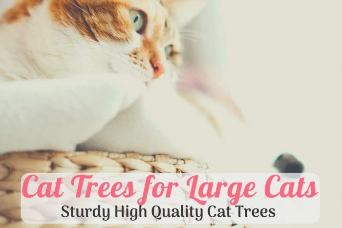large on the best cat tree for large cats